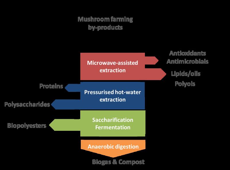 Funguschain project approach