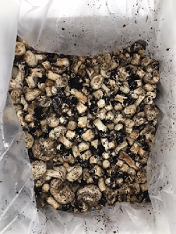 Raw material: Mushroom waste from Monaghan