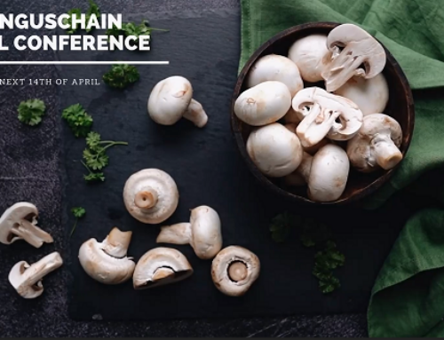 The Funguschain Final Conference, Coming Soon